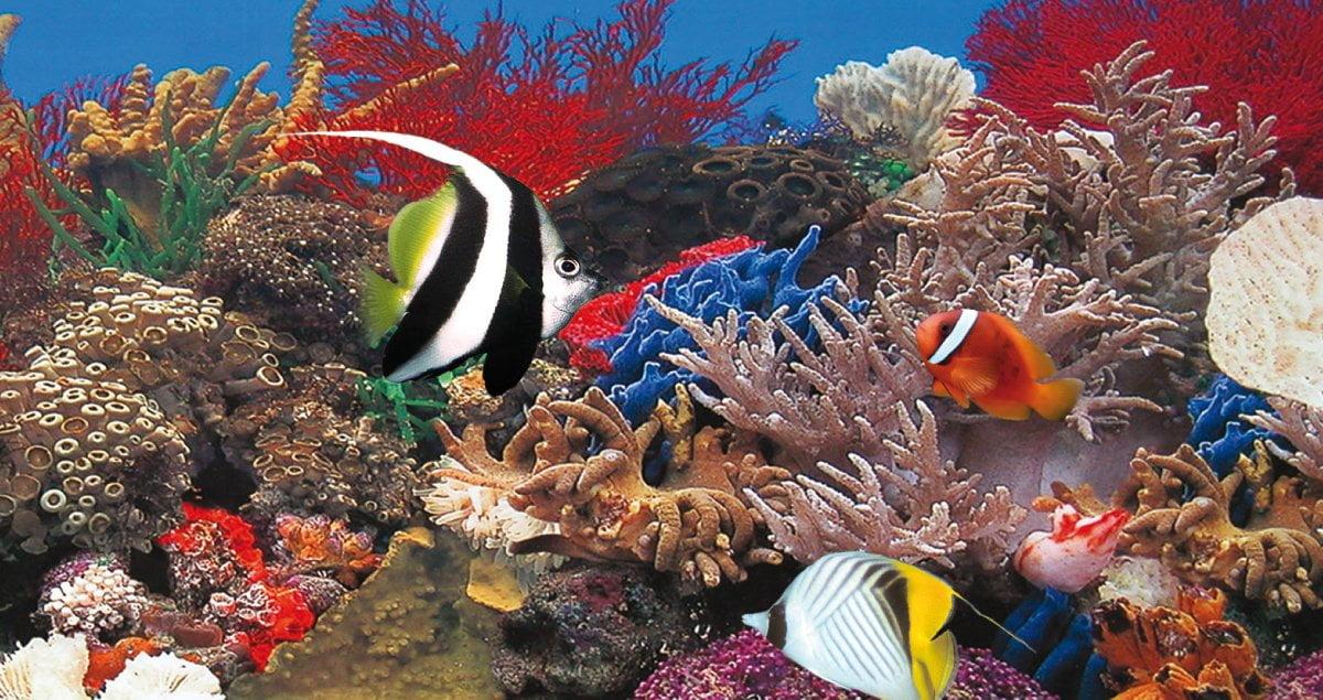 Icanews el acuario marino for Peces de acuario marino