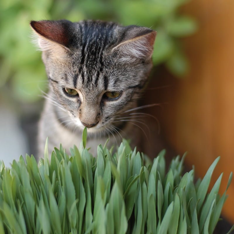 gato_higiene6
