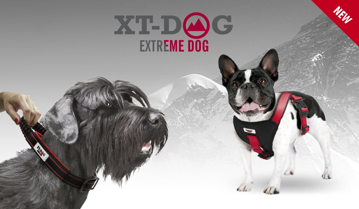 Collares, correas y arneses XT-DOG