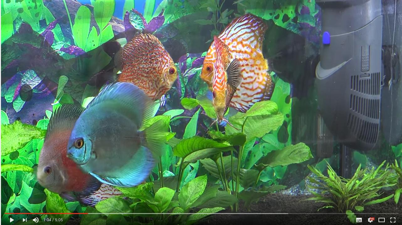 Discos y crías con filtro Hydra