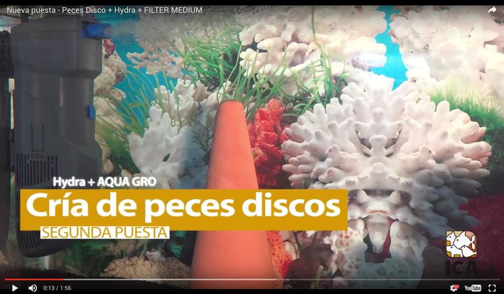 Nueva puesta – Peces Disco + Hydra + FILTER MEDIUM