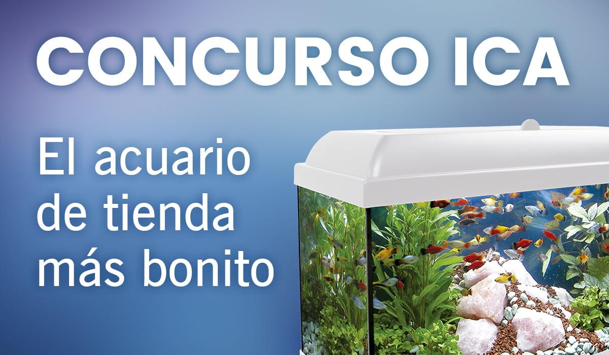Concurso ICA: El acuario de tienda más bonito
