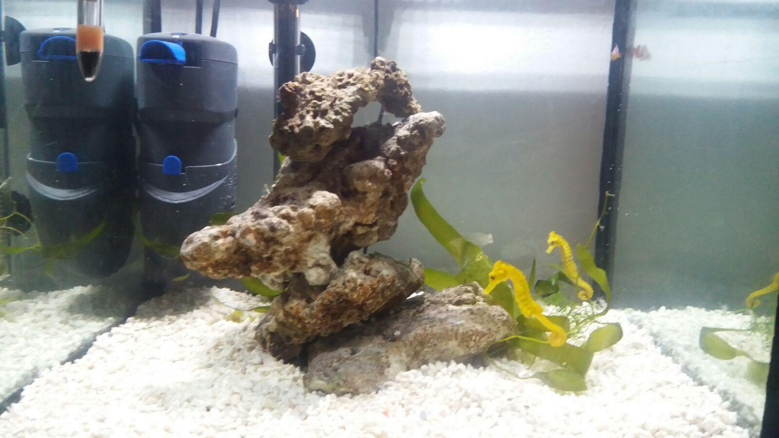 Hydra20 y Caballitos de Mar