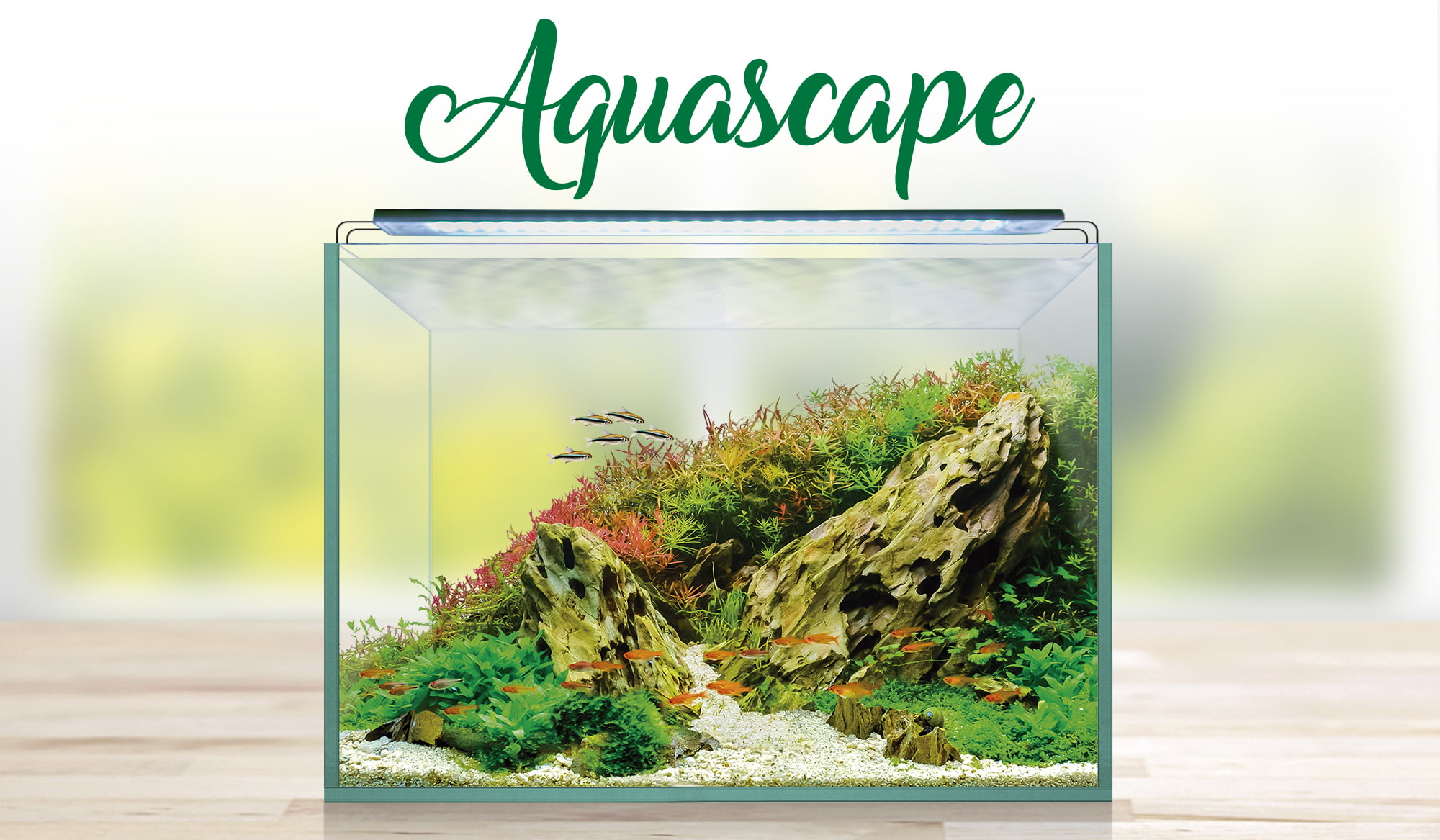 Nuevos acuarios Aquascape RGB