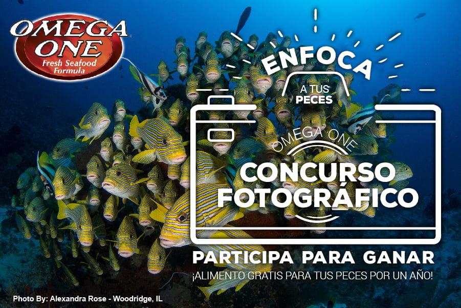 Concurso fotográfico anual Omega One 2020